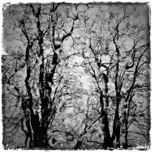 Rainy day #6x6 #snapseed #iphone #pixlromatic #trees #rain  (Taken with instagram)