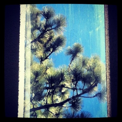 Blue sky and trees through Tahoe skylight (Taken with instagram)