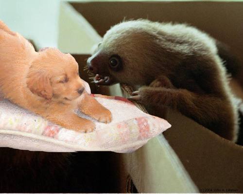 Muddypaws & Sloths: a classic Friday combo.