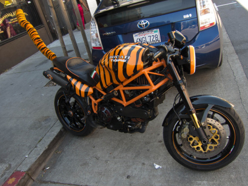 laughingsquid:  Ducati Tigre, A Tiger Themed Motorcycle With a Tail  Did Ocho Cinco get this custom made back in his Bengals days?