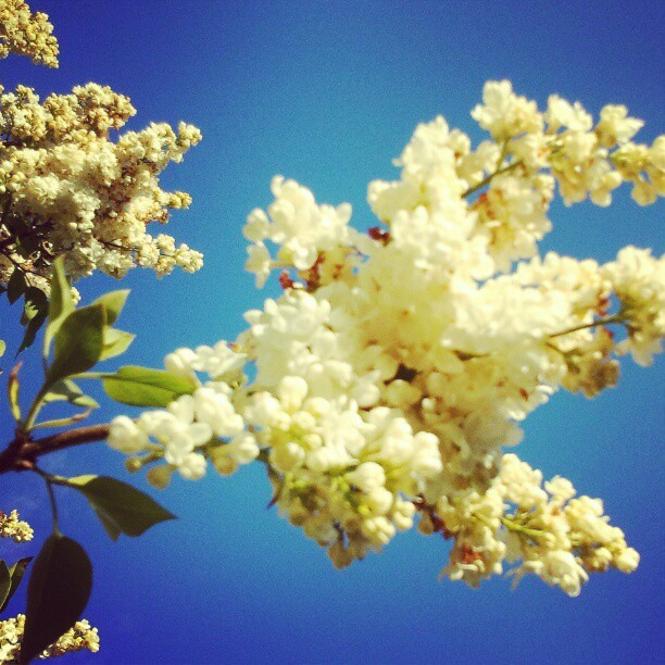 #Spring #Blossoms #BackYard #home #macro #Instagram #Instamood #eavig #Instanation #Minnesota  (Taken with Instagram at Lancer Village)