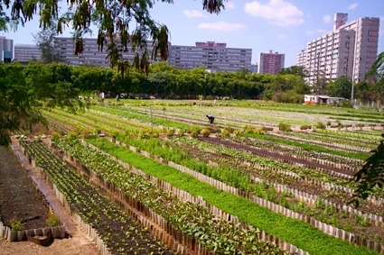 See what urban agriculture can look like in a land with very little use of fossil fuels.  A glimpse of our future?  See Micheal Levenston's full article here. Photo courtesy of City Farmer News.