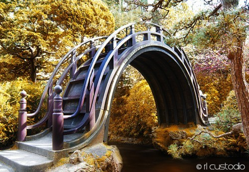 Moon Bridge - Japanese Tea Garden in San Francisco