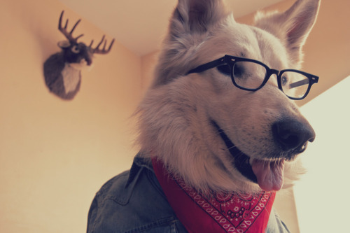 hotphotography:  hipster dog is hipster