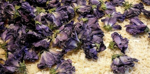 100 Dried Rose of Sharon Flowers, Full Roses, Purple / Lavender in color, Great as they are for Scrapbooking, Weddings, Potpourri, Candles,