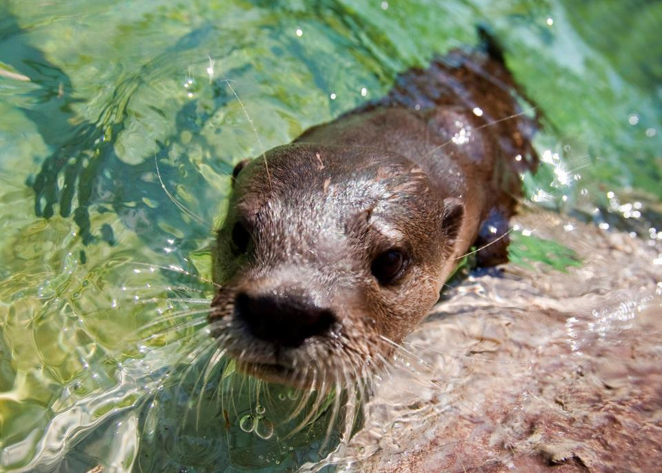 I just feel like Monday-Wednesday my spirit animal is an Otter named Mark that works part time at H&R Block. The real question however is what dream is Mark following when not at work…