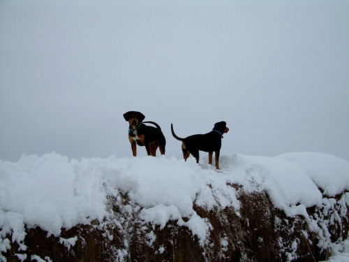 Hay bale pups on a snowy day :) Binker (left) Noodle (right)