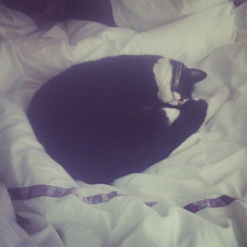 Lazy kitty (Taken with instagram)