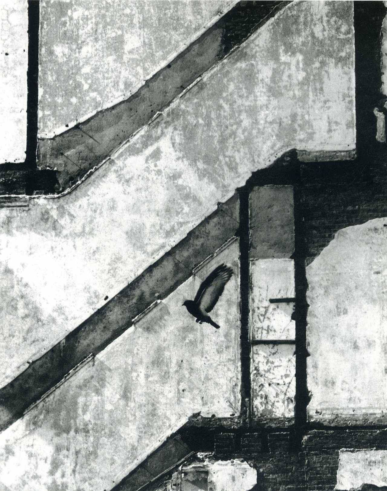 Landing Pigeon, New York, 1960 Andre Kertesz