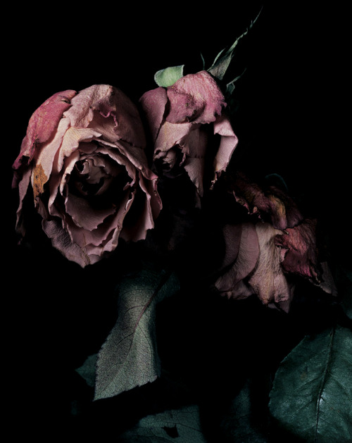 Photographed by David Sims for Visionaire #40, Roses.