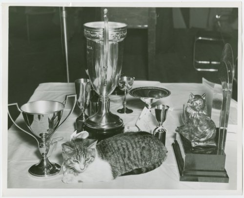 I iz the champion, my friendz. This photo from our 1940 World's Fair Collection in our Manuscripts and Archives Division shows a modest feline surrounded by lots and lots of trophies at the Fair's cat show. It's unclear if the cat actually won the trophies, or if it just decided to plop itself down on the trophy table (very possible). Happy Caturday (sorry - we were on hiatus for two weeks. Let's just call it a cat nap). Interested in Caturday? Check out all of our entries. Interested in the World's Fair Collection? Download our acclaimed free Biblion app, and browse through photos, letters and more.