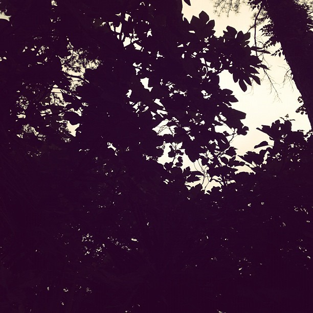 #dark #light #silhouette #leaves #tree (Taken with instagram)