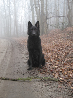 farmeralmond:  Need a belgian Shepherd in my life.