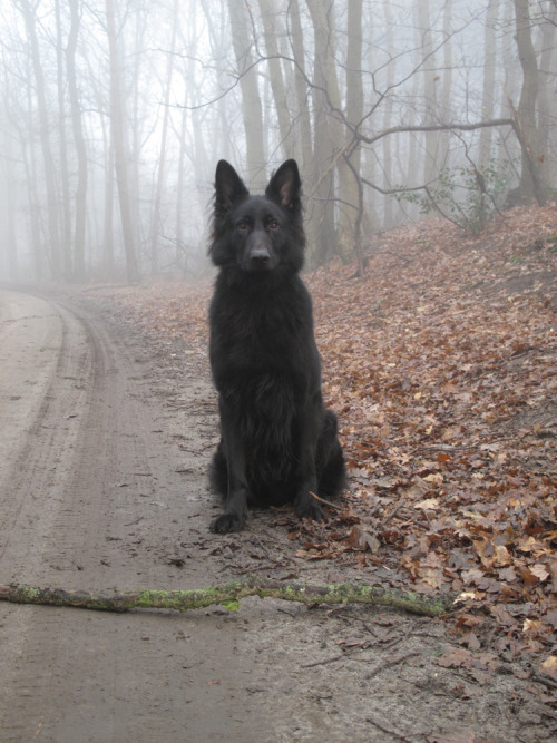 """If a man shall meet the Black Dog once, it shall be for joy; and if twice, it shall be for sorrow; and the third time, he shall die."""