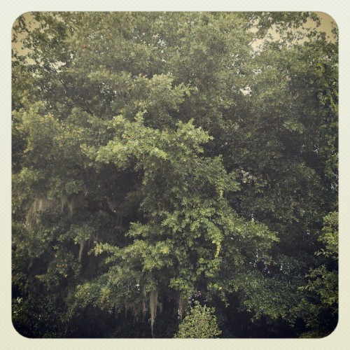 Dat tree. (Taken with instagram)