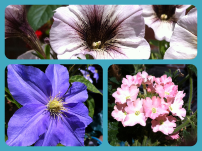 Nature's Perfection. Petunia, Clematis and Verbena.
