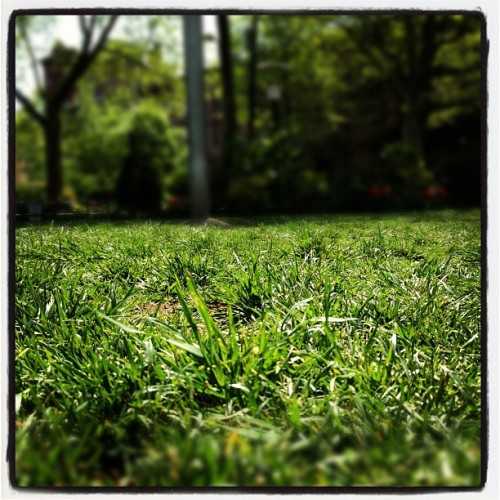 #spring  (Taken with Instagram at Van Vorst Park)