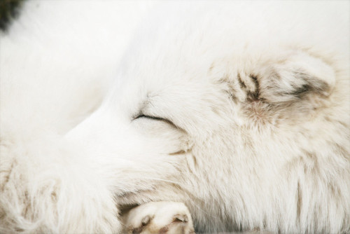Sleeping beauty #1 by jinterwas on Flickr.Bello!
