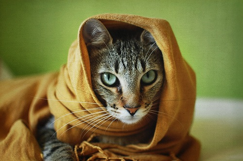 """Something strange happens to Khajiit when they arrive in Skyrim.""  - M'aiq the Liar"
