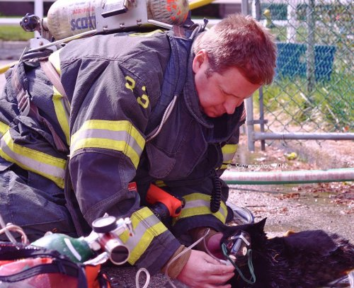 I LOVE MEN WHO LOVE ANIMALS. Firefighter Charlie Williams of Rockland Fire aids a cat with oxygen after he rescued it from a recent Massachusetts house fire.  photo by photojournalist Stephanie Spyropoulos.
