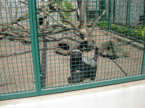 fivemonthsinberlin:  A real honey badger!  That cage won't contain the fury for long! D: