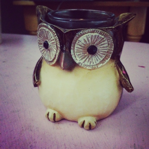 Timmy the owl