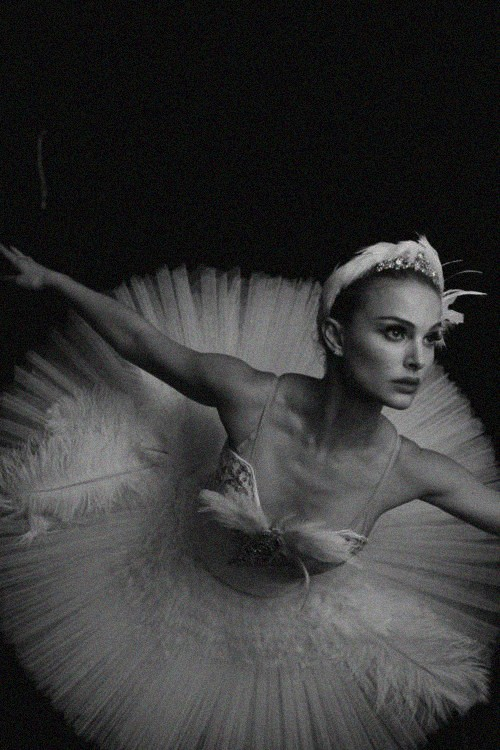 visuallyoverwhelming:  white swan