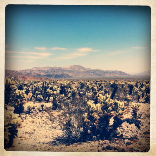 dustdb:  Cholla Gardens, Joshua Tree
