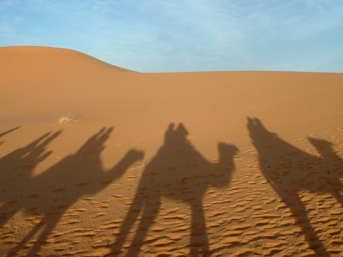 Camels by Clav on Flickr.