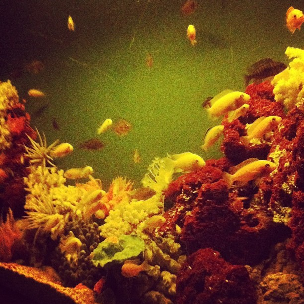 Aquarium in a strange club (Taken with instagram)