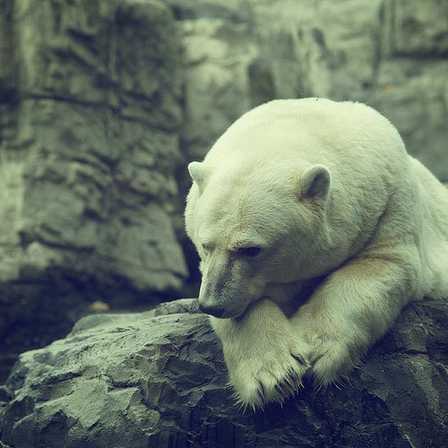 simplici:  zoo central park NY (by Jonatan Catalan)