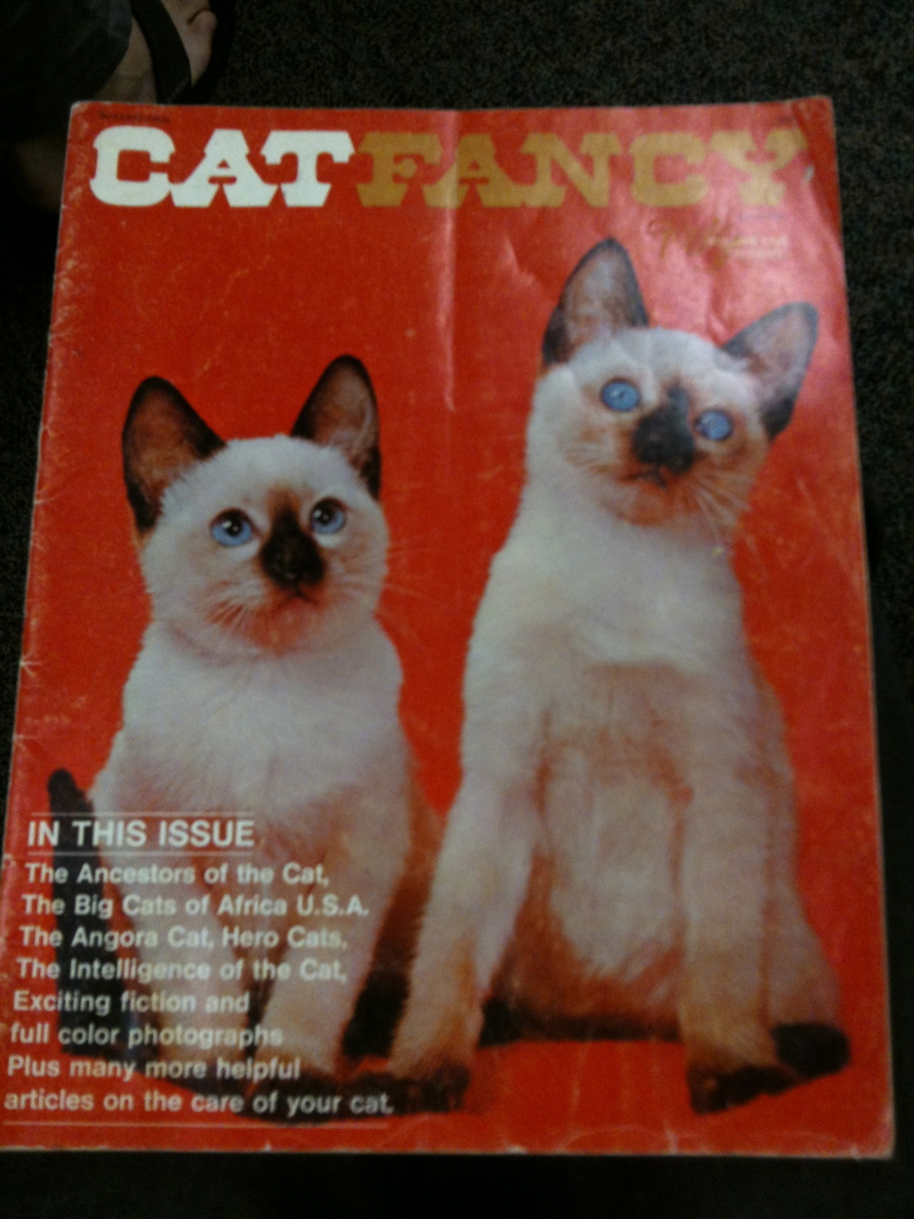 jayums:  best .69 of my life.   life goal: feature on the cover of cat fancy