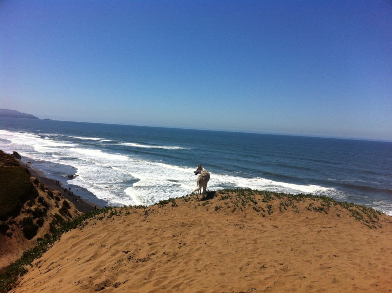 Spirit's non-stop day of birthday adventure started here at Fort FUNston, SF.  Off-leash paradise of rolling dunes filled with hidden paths and a huge stretch of beach down below.  Every dog MUST experience it!