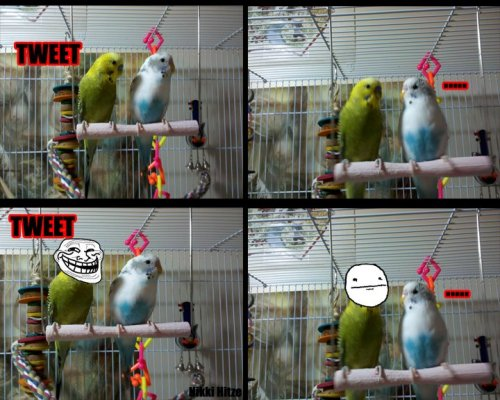 kmalleena:  My troll birds. The Green one is Gimli and the White one is Quill. Made by my awesome roommate, their Aunt Nichelle xD  Hahahahaha XD
