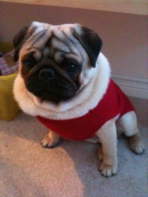 Billy's Christmas sweater :3