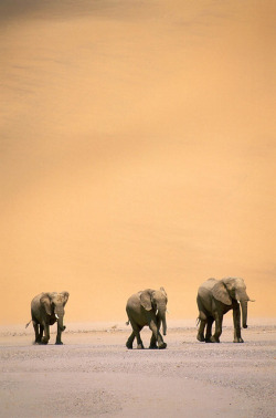 3 Wise Elephants
