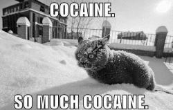 so much cocaine !