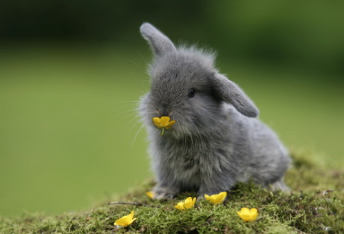 magicalnaturetour:  Bunny eating flowers via Pinterest :)  MFB!