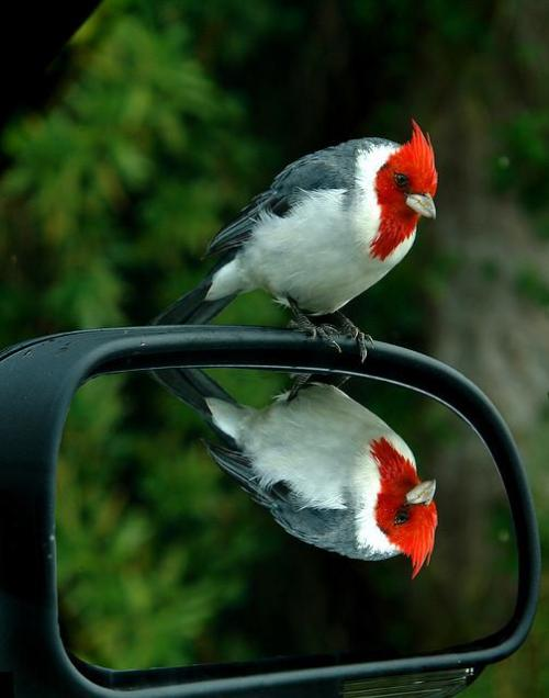 magicalnaturetour:  Mirror, Mirror….. by Abet. :)