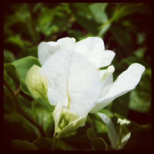 #iphoneography #photoshoot #flower #hobby #photo  (Taken with instagram)