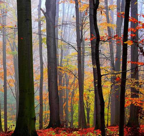 Forest Colors…. by Tobi_2008