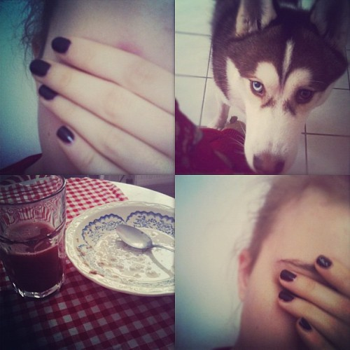 Happy #Sunday! #goodmorning #breakfast #Berlin #siberianhusky #puppy #husky #bloodorange #tired #sleepy (Taken with instagram)