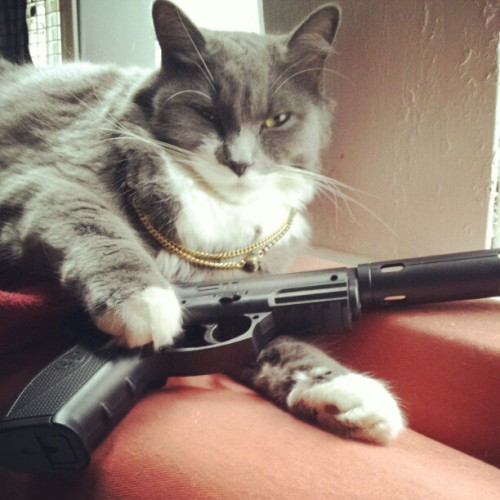 Seriously a thug. #cats #catsofinstagram #hoodratstuffwithmyfriends (Taken with instagram)