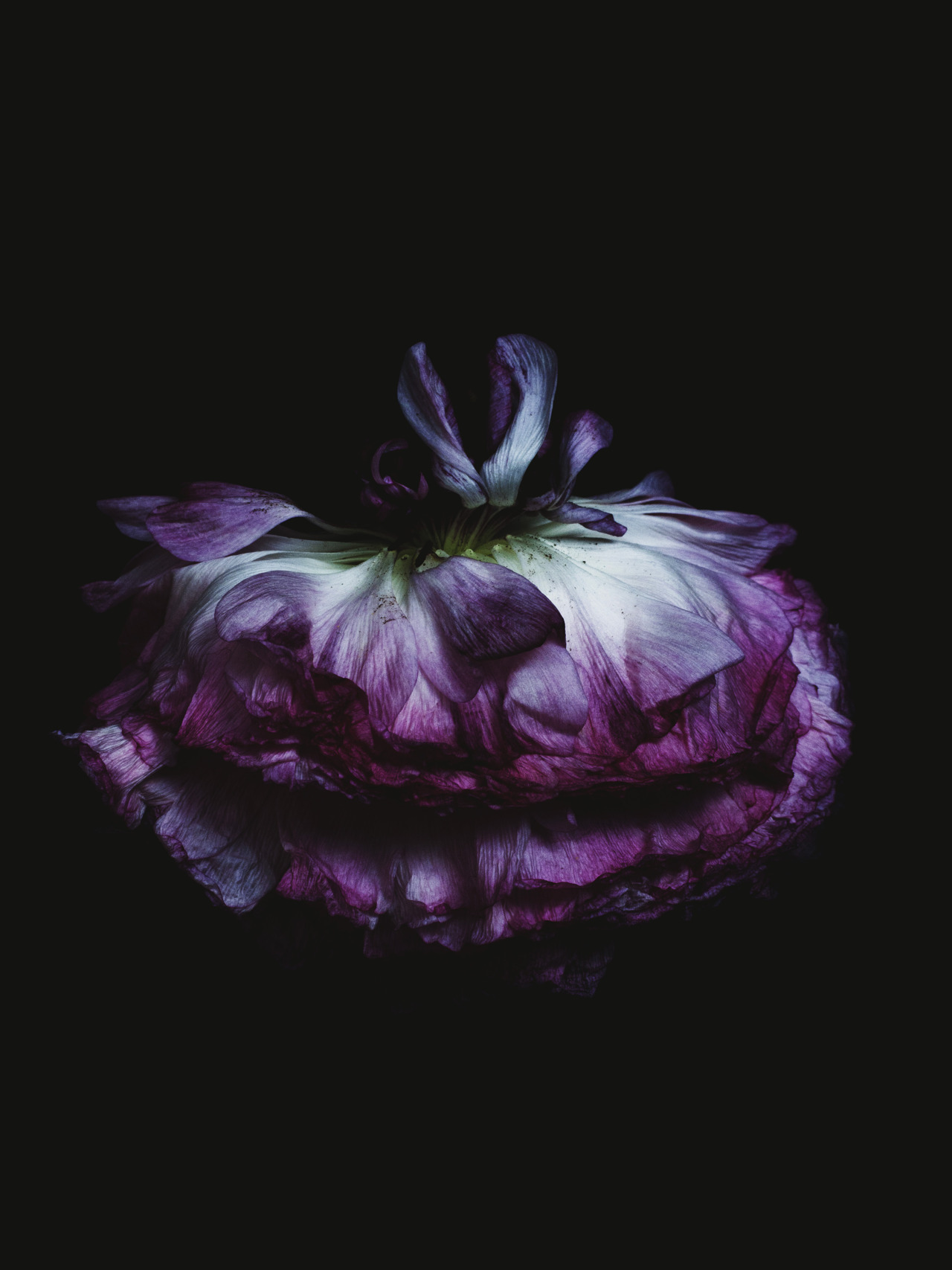 Decaying flower was shot by Billy Kidd. (do you see the Cheshire cat?)