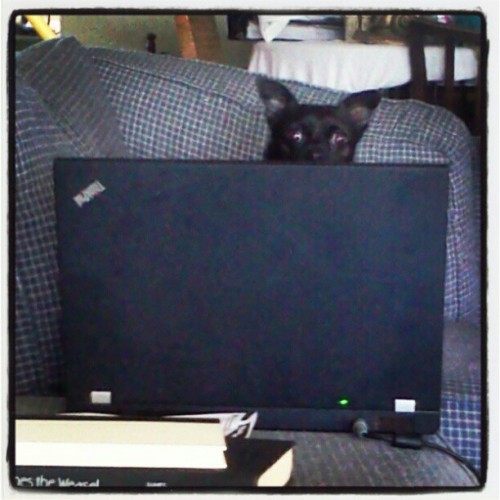 The REAL computer nerd in the house #chihuahua  (Taken with instagram)