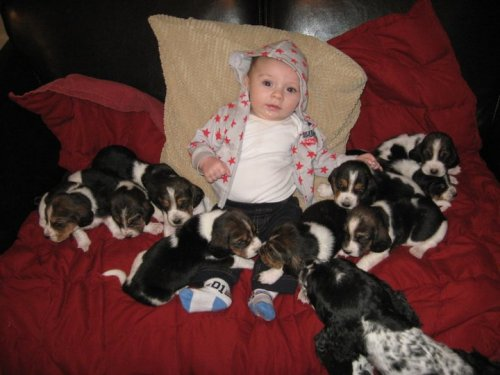 This baby is in puppy heaven.