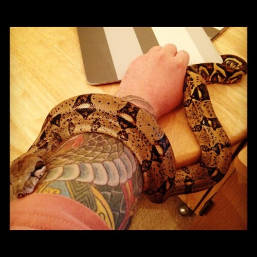 unclegar77:  AzitA my female BCI Columbian Red Tail Boa #snake #boa (Taken with instagram)   Well this is an old one. She's a lot bigger now :) My first snake.
