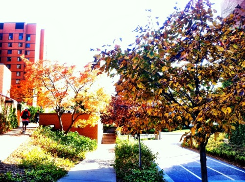 The scenery outside my residence hall. I really wish I had the same pic minus the people walking there.