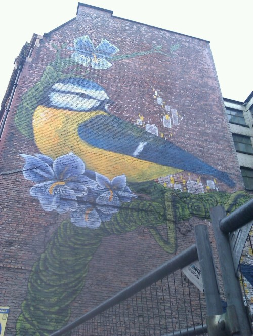 Blue tit ~ Northern Quarter, Manchester.