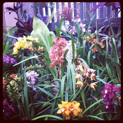 Pretty. #flowers #greenhouse #orchids #sandiego #earthfest #balboapark (Taken with instagram)